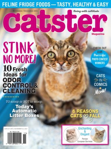 Catster November 01, 2021 Issue Cover