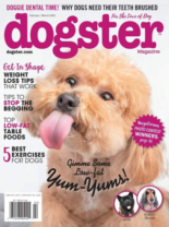Dogster | 2/1/2020 Cover