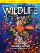 National Wildlife June 01, 2021 Issue Cover