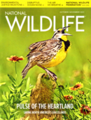 National Wildlife October 01, 2021 Issue Cover