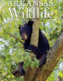 Arkansas Wildlife March 01, 2021 Issue Cover
