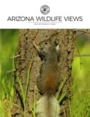 Arizona Wildlife Views | 9/2020 Cover