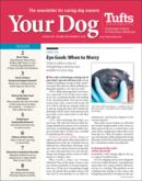 Your Dog August 01, 2021 Issue Cover