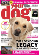 Your Dog | 8/2020 Cover